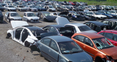 OVER 2000 cars on 50 ACRES